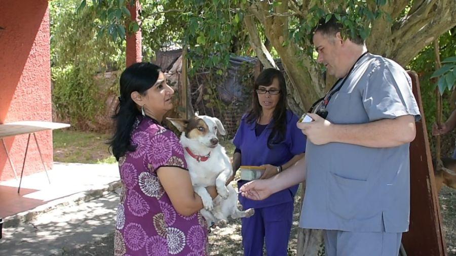 El Municipio atendió, vacunó y castró a 13 perros abandonados en una vivienda por sus dueños