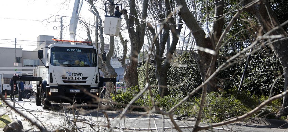 El municipio potencia los operativos de poda de seguridad y la instalación de luces led