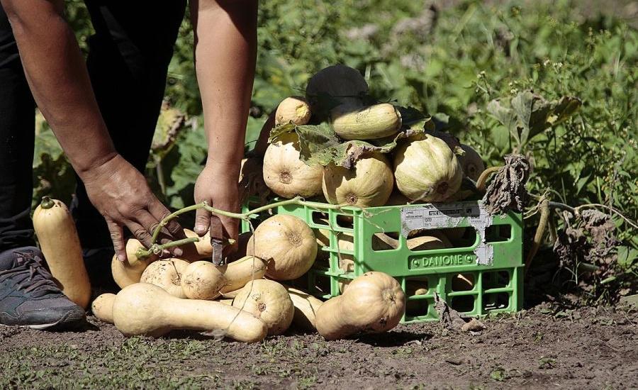 La Granja Educativa Municipal potencia la producción de verduras y hortalizas con fines solidarios
