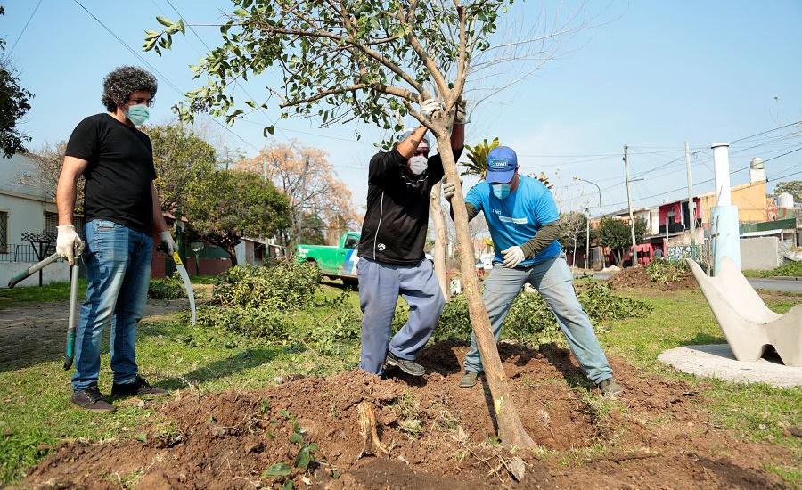 El Municipio cuida los árboles y profundiza la forestación con especies nativas