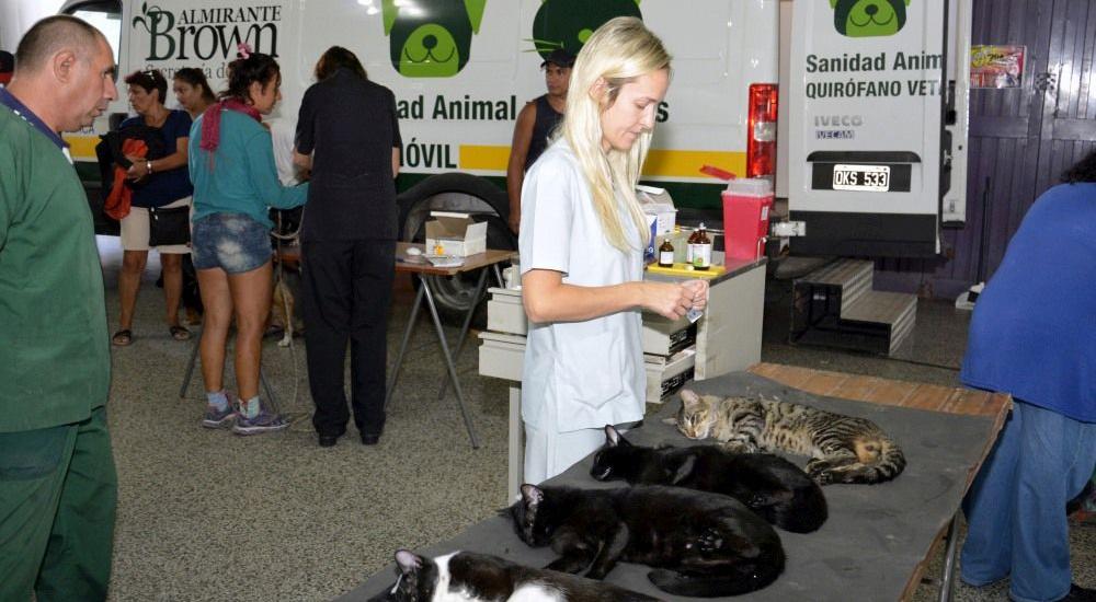 Operativos de castración y vacunación de mascotas en Malvinas