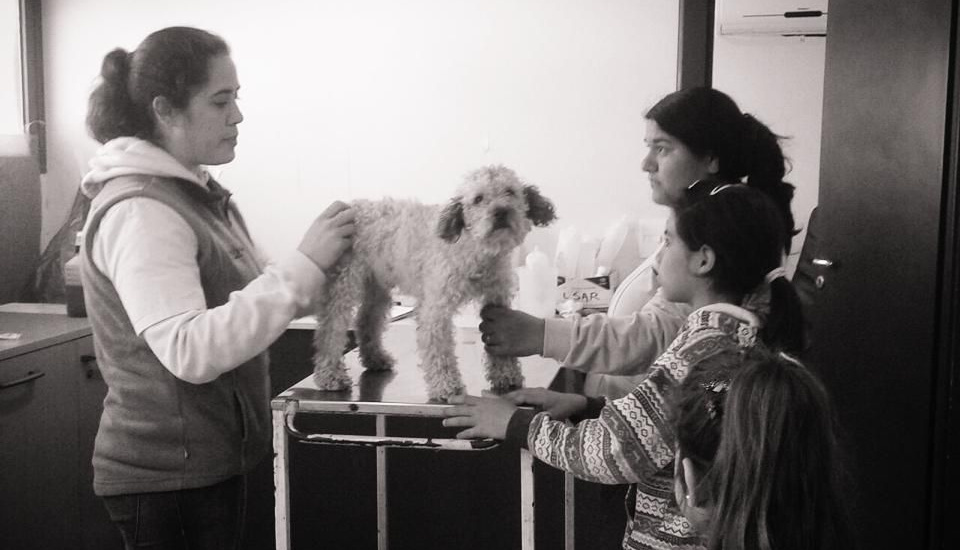 Longchamps: Siguen operativos de castración gratuita de perros y gatos