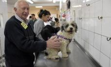 Continúan en Longchamps los operativos de castración de perros y gatos