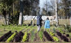 Entregaron semillas y plantas a vecinos que completaron cursos de huerta